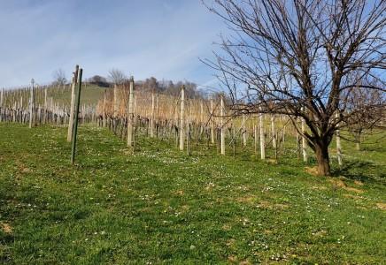 Image for Zidanica, Lend. Gorice 2002